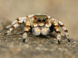 Wie gefährlich sind Vogelspinnen als Haustier?