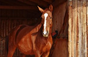 Ein eigenes Pferd!? - Kosten & Haltung