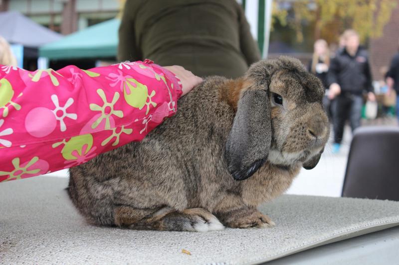 Häufige Kaninchenkrankheiten und ihre Behandlung