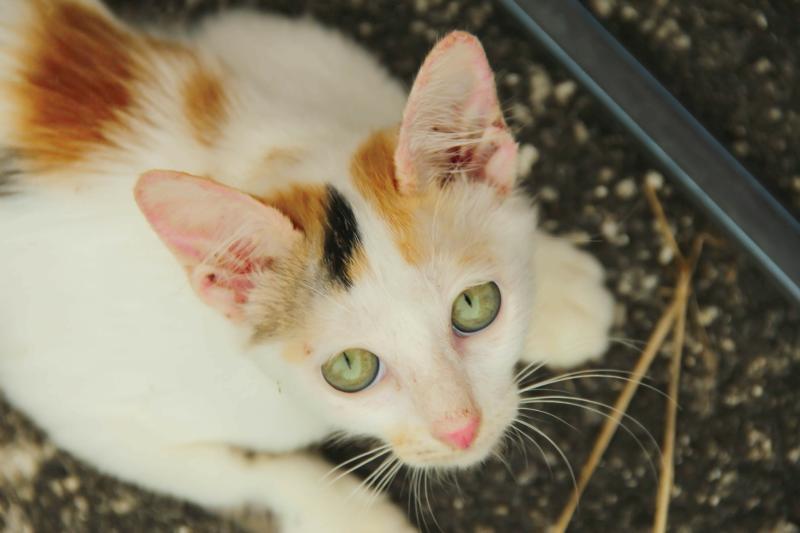 Die 5 häufigsten Katzenkrankheiten