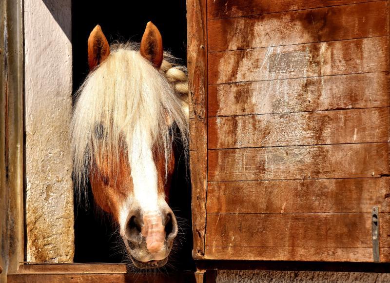Hippologica – Pferdesportmesse Berlin