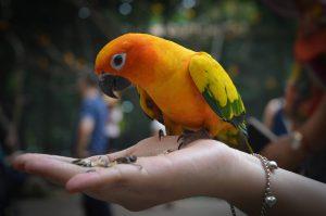 Vogelhaltung – Nur wer geduldig ist bekommt den Piepmatz handzahm