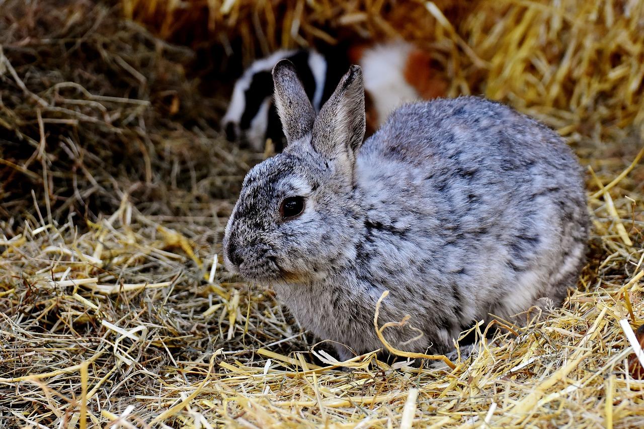 Richtige Einstreu für Kaninchen