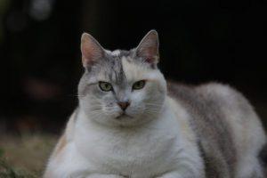 Katzendiät: Wenn meine Katze zu dick ist