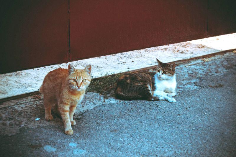 Was tun, wenn sich Katzen plötzlich nicht mehr vertragen? - Meine Haustiere