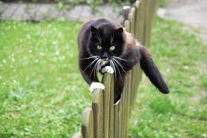 Freigang für die Katze