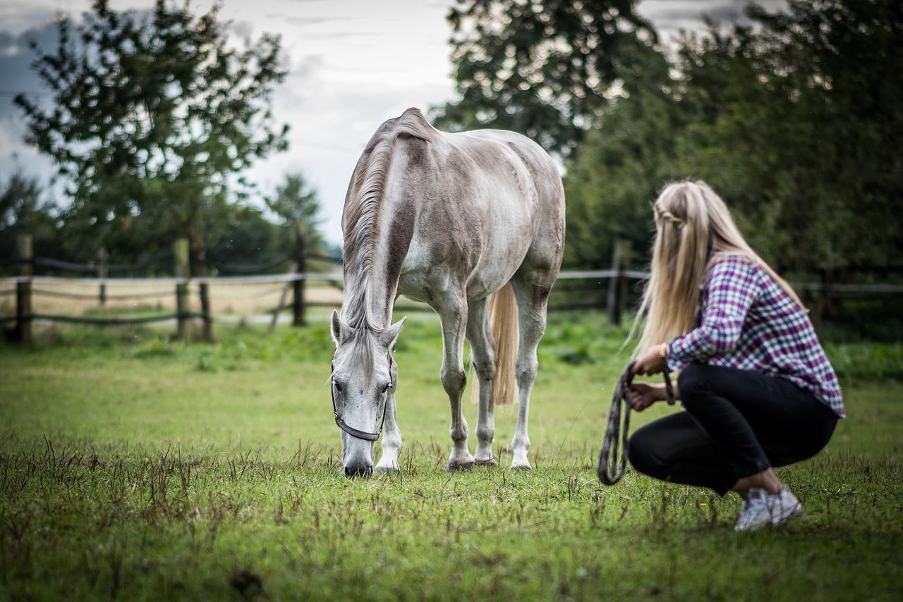 Pferde und Menschen: Eine gemeinsame Entwicklungsgeschichte