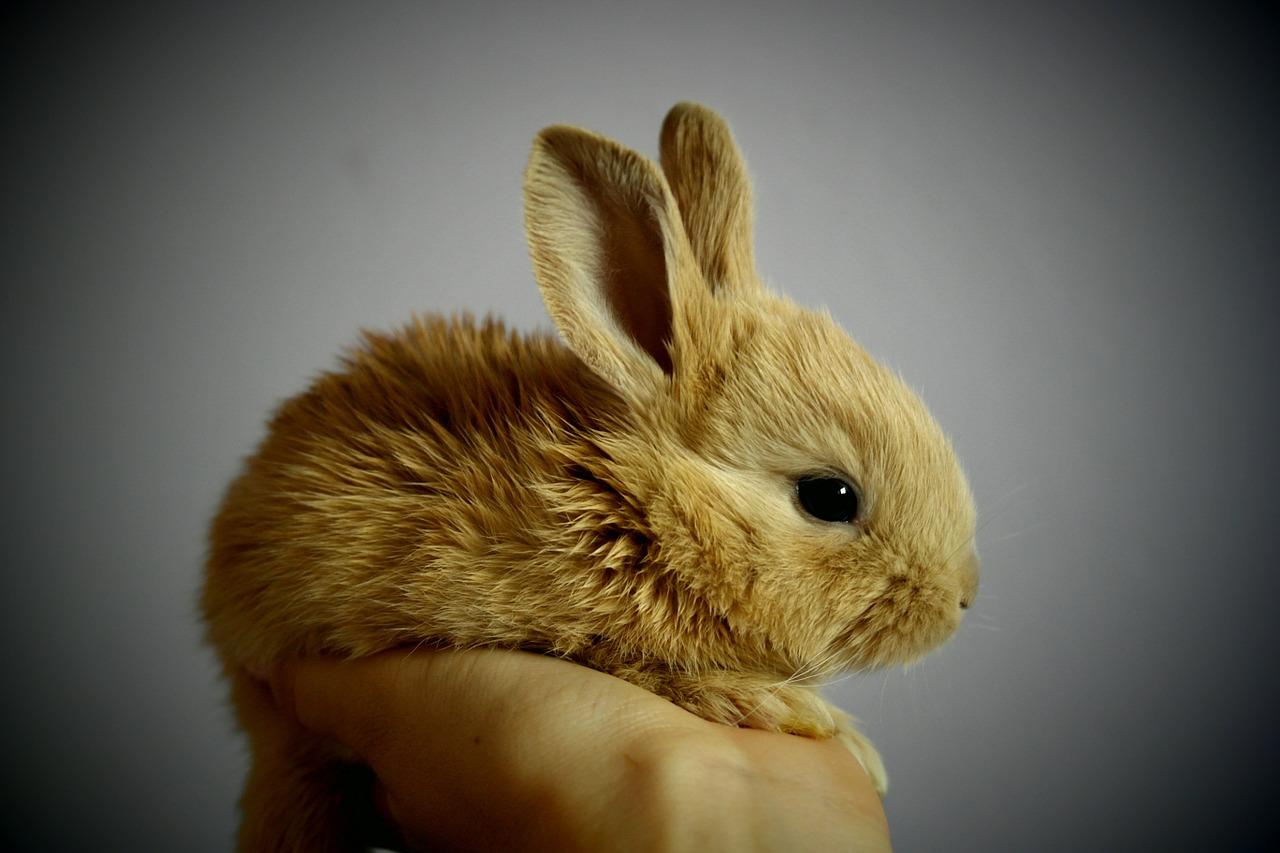 Kaninchen: Abszesse frühzeitig erkennen