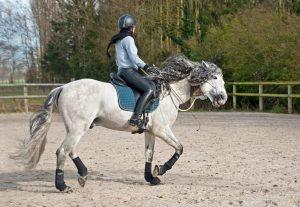 Pferde reiten - Darauf ist zu achten