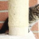 Eine Katze kommt ins Haus – Die notwendige Ausstattung