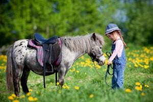Dem Haustier Pferd ein perfektes Zuhause bieten