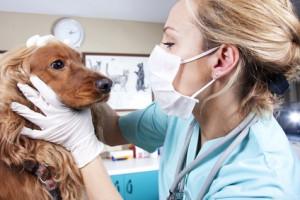 Tierärztin untersucht einen Hund