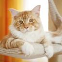 Warum brauchen Katzen einen Kratzbaum?