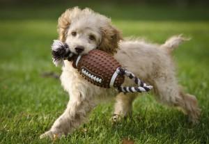 Ein Hund spielt auf dem Rasen