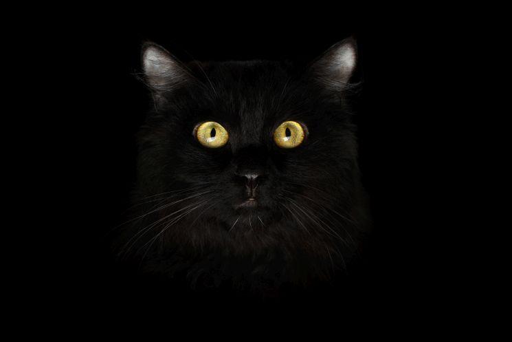 So überwintert Ihre Katze am besten