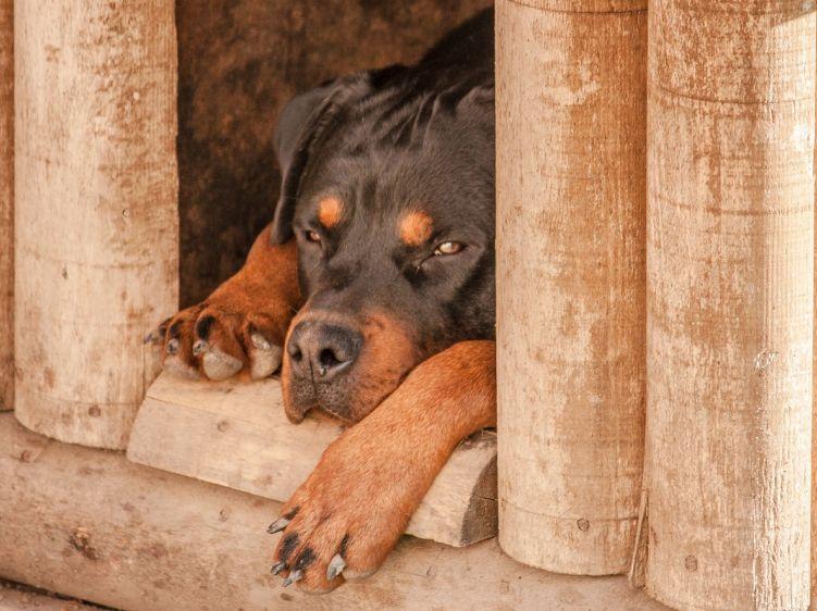 Tierisch wachsam: Sind Hunde die besseren Alarmanlagen?