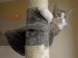Die richtige Pflege für schwangere Katzen