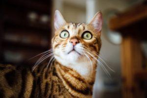 Das stresst Ihre Katze