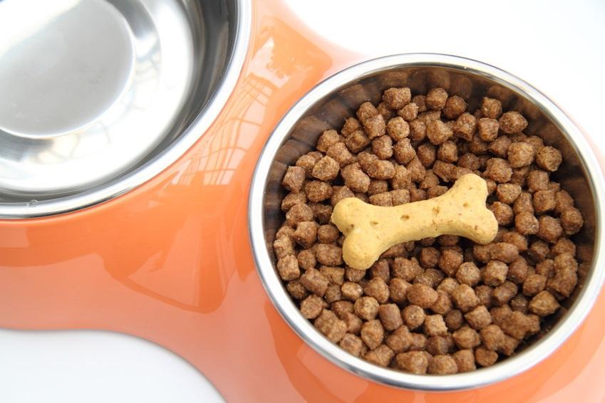Gesunde Ernährung für Hunde: Getreideverzicht kann sinnvoll sein