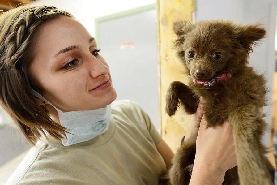 Tierkrankenversicherung: Nur 17 Prozent aller Hundehalter haben eine abgeschlossen